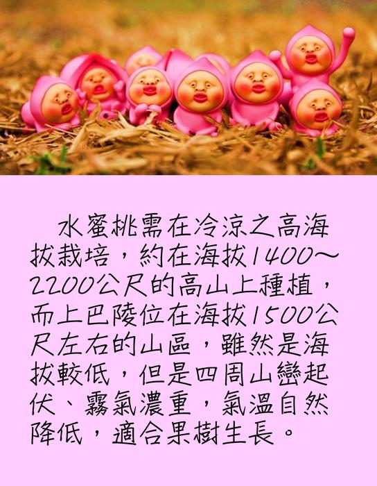 水蜜桃文化